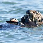 Sea otter dining club by Anthony Brewer