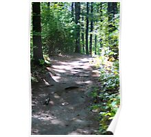 Noanet Woodlands Hiking Trail Poster