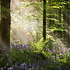Bluebell Light by GaryMcParland