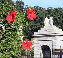 Blooms In Arlington by Cora Wandel