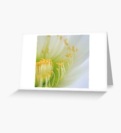 Big White Cactus Flower Macro Abstract 1 Greeting Card