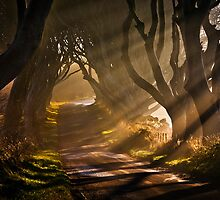 Morning Light by GaryMcParland