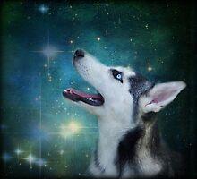Star Gazing by jodi payne