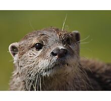 An otter Photographic Print