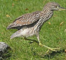 Heron hopscotch by Heather King