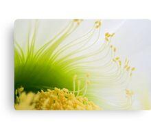Big White Cactus Flower Macro Abstract 2 Canvas Print