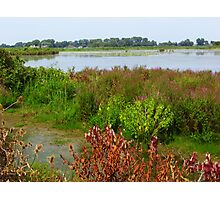 Wildflowers On The Bay Photographic Print