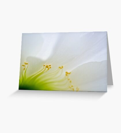 Big White Cactus Flower Macro Abstract 3 Greeting Card