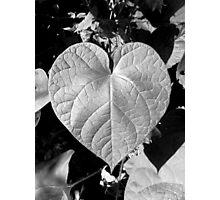 The Love Of Gardening Photographic Print