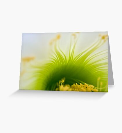 Big White Cactus Flower Macro Abstract 4 Greeting Card