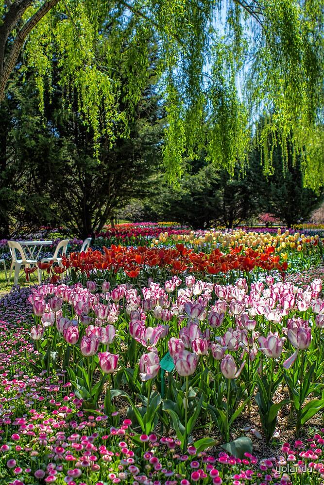 Tulip Top Gardens by yolanda