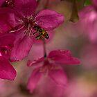 Bee Pink by yolanda
