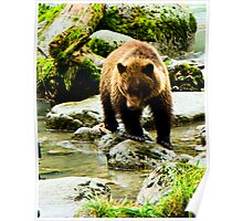 Young Grizzly on the Chilkoot River Poster