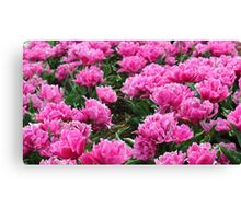 Unique Pink Tulips  Canvas Print