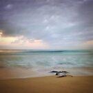 Sea Lace by Kevin Bergen