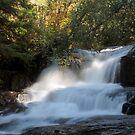 Alsea Falls 1 by Annie Underwood