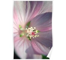 Pink little flower Poster