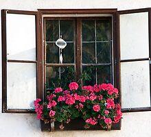 Salzburg Geraniums by phil decocco