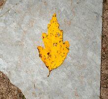 slate leaf by arteology