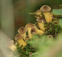 Woodland fingers by Greybeard