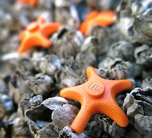 Seastars by bricksailboat