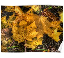 Just Cool Off ~ Maple Leaves ~ Poster