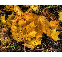 Just Cool Off ~ Maple Leaves ~ Photographic Print