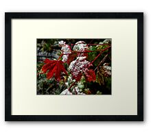 That Frost Me ~ Vine Maple Leaves ~ Framed Print
