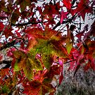 It Just Gets Better ~ Leaves Fall Colors ~ by Charles & Patricia   Harkins ~ Picture Oregon