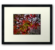 It Just Gets Better ~ Leaves Fall Colors ~ Framed Print