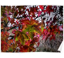 It Just Gets Better ~ Leaves Fall Colors ~ Poster