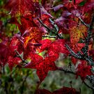 Just Slide Along ~ leaves Fall Colors ~ by Charles & Patricia   Harkins ~ Picture Oregon