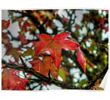 Hang Them High ~ Leaves Fall Colors ~ Poster