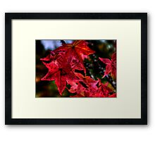 Just One Of The Group ~ Leaves Fall Colors ~ Framed Print