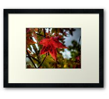 One Last Time ~ Leaves Fall Colors ~ Framed Print