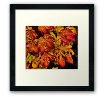 A Real Knockout ~ Leaves Fall Colors ~ Framed Print