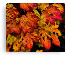 A Real Knockout ~ Leaves Fall Colors ~ Canvas Print