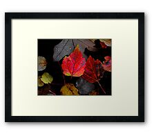 Just Little Old Me ~ Leaves Fall Colors ~ Framed Print
