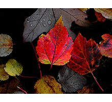 Just Little Old Me ~ Leaves Fall Colors ~ Photographic Print