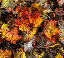 A Grand Old Bunch ~ Leaves Fall Colors ~ by Charles & Patricia   Harkins ~ Picture Oregon