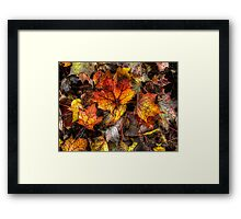 A Grand Old Bunch ~ Leaves Fall Colors ~ Framed Print