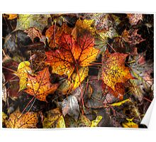A Grand Old Bunch ~ Leaves Fall Colors ~ Poster