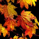 Another Good Day ~ Leaves Fall Colors ~ by Charles & Patricia   Harkins ~ Picture Oregon