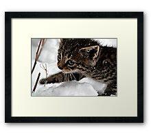 Snow Tiger Framed Print