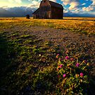 Mormon Row Barn and Thistles by KellyHeaton