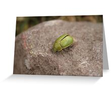 Green Beetle on a Rock Greeting Card