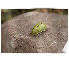 Green Beetle on a Rock Poster
