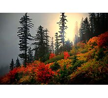 Peace Of Mind ~ Fall Colors ~ Photographic Print