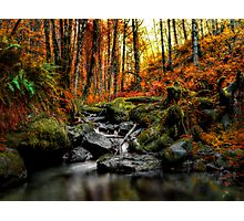 My Little Place ~ Fall Colors ~ Photographic Print