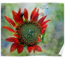 Sunflower Petals Of Flame Against The Sky Poster